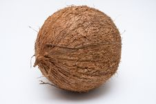 One Coconut Isolated On White Background Royalty Free Stock Images