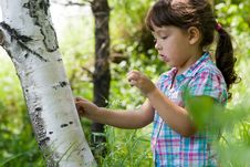 Girl And Birch Stock Photography