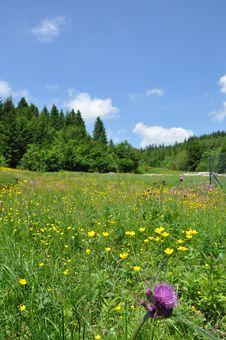 In Carpathian Mountains Stock Photos