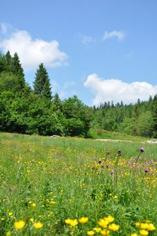 Free Carpathian Mountains Stock Images - 20043154