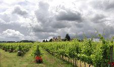 Free Vineyard Royalty Free Stock Image - 20044156
