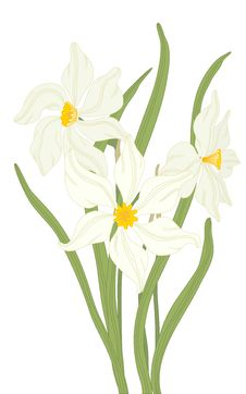 Free Narcissus. Royalty Free Stock Images - 20044779