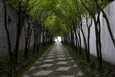 Free Chinese Tree Alley Royalty Free Stock Photography - 20046007