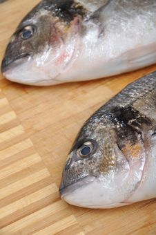 Free Fresh Fish Stock Images - 20047364