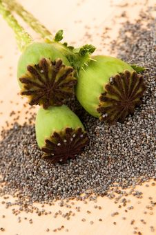 Free Poppy Seeds And Poppy Heads Stock Photo - 20048430