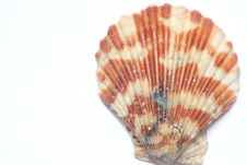 Free Shell Stock Photography - 20049242