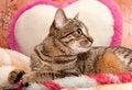 Free Cat Lie On Pillow Stock Photos - 20052153