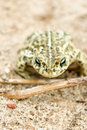 Free Frog Stock Photography - 20055192