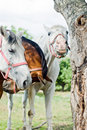 Free Horse Royalty Free Stock Images - 20055339