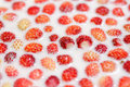 Free Wild Strawberries In Milk Royalty Free Stock Photo - 20057595