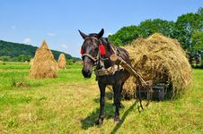 Free Hay Preparation Stock Image - 20050991