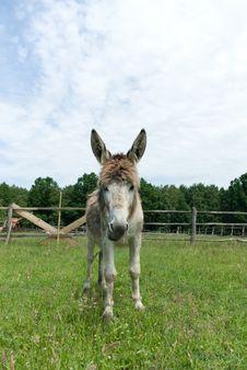 Free Donkey Stock Images - 20055104