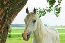 Free Horse Royalty Free Stock Photography - 20055227