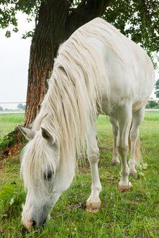 Free Horse Stock Image - 20055241