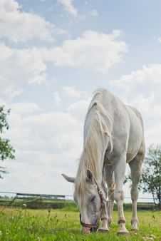 Free Horse Royalty Free Stock Images - 20055259