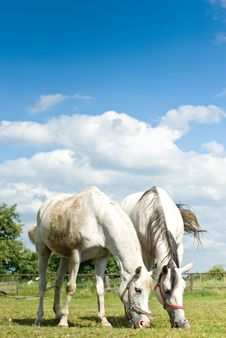 Free Horse Stock Photo - 20055280