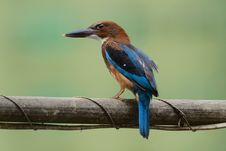 Free White-Throated Kingfisher Stock Photography - 20057802