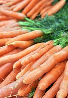 Free Fresh Carrots Stock Images - 20058024