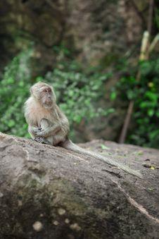 Free Monkey Stock Images - 20058034