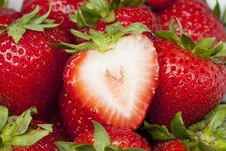Free Fresh Red Strawberries Royalty Free Stock Photo - 20058075