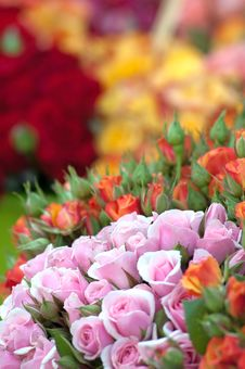 Free Colorful Roses Royalty Free Stock Images - 20058199