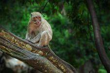 Free Monkey Stock Images - 20058424