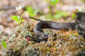 Free Snake Royalty Free Stock Photos - 20069648