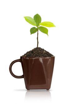 Free Seedlings In Coffee Cup. Royalty Free Stock Image - 20064656