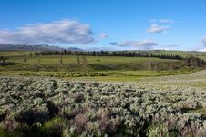 Lamar Valley In Yellowstone Royalty Free Stock Photos