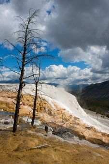 Free Dead Trees At Mammoth Hot Springs, Yellowstone Royalty Free Stock Photo - 20064815