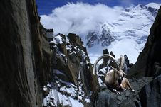 Free Ibex Alps Montblanc Cliff  Nature Royalty Free Stock Photos - 20065198