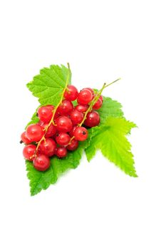 Red Currants With Green Leaves Royalty Free Stock Image