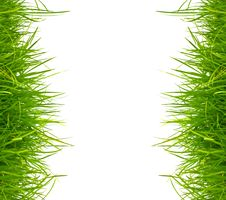 Free Fresh Spring Green Grass Stock Photos - 20066533