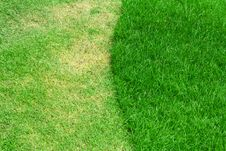 Free Image Of Green Grass Royalty Free Stock Image - 20066936