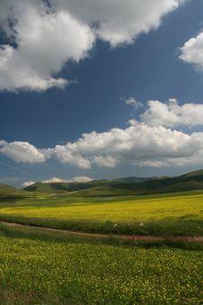 Free Castelluccio Flowers Landscape Stock Photo - 20068000
