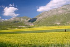 Free Yellow Fields In Castelluccio Stock Photography - 20068022
