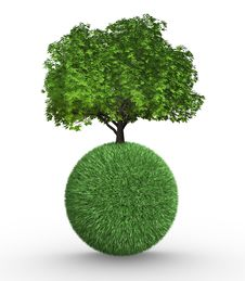 Tree Growing On A Sphere Stock Photos