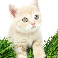 Free Cat Behind Grass Royalty Free Stock Photos - 20071528