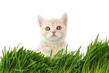Free Cat Behind Grass Stock Photos - 20071533