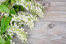 Free Bird Cherry Branch On Wooden Surface Stock Images - 20072634