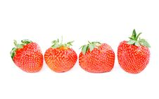 Row Of Four Strawberries Isolated Stock Photo