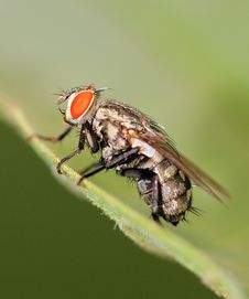 Free Fly Macro Stock Images - 20073934