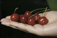 Sweet Cherry In Sweet Woman Hands Stock Photo