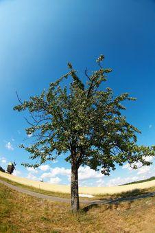 Free One Tree Royalty Free Stock Photo - 20074605