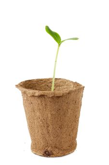 Free Sprout Stock Image - 20074901
