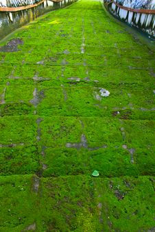 Free Moss And Stairway Royalty Free Stock Image - 20077576