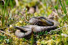 Free Snake Stock Image - 20079711