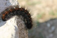 Free Beautiful And Fluffy Caterpillar Royalty Free Stock Images - 200705809