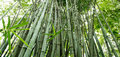 Free The Bamboo Groves Stock Images - 20081304