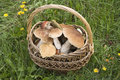 Free Basket With CEPS Royalty Free Stock Photography - 20089607